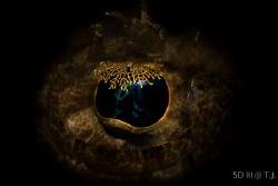 Golden eye by Shih Shun Lei