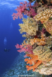 soft corals and diver by Mehmet Öztabak