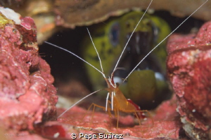 two critters, one pic @Mergui Archipelago