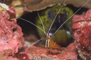 two critters, one pic @Mergui Archipelago  by Pepe Suárez