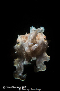 Cuttlefish by Tracey Jennings