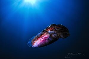 ~ Colourful Alien ~ by Geo Cloete