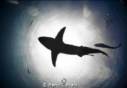 Oceanic Black Tip backlight by Marco Calvani