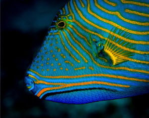 Blue and yellow and... by Chris Pienaar