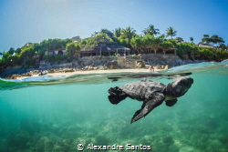 Turtle release in Nihiwatu, Sumba, Indonesia. by Alexandre Santos
