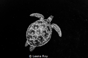 Green turtle swimming through space by Leena Roy