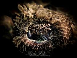 L A P P E T Eye of a Crocodile Flathead by Lilian Koh