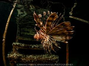 THE DRAGON by Marko Perisic