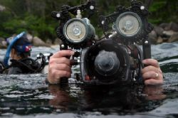 Some divers always have a camera stuck to their face? by Glenn Poulain