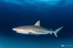 a reef shark in a motion blur... by Nadya Kulagina