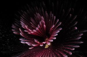 ~ Pollen ~ by Geo Cloete