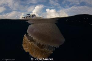Underwater aliens as big as the boat :) taken after a fan... by Pepe Suarez