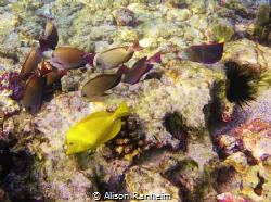 Purplefishscape! by Alison Ranheim