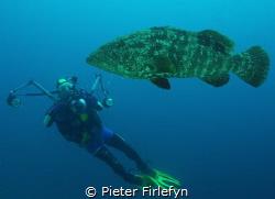 Grouper! by Pieter Firlefyn