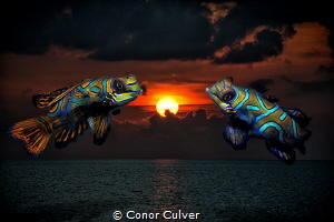 """""""Mandarin Sunset"""" part of my Underwater Surrealism series... by Conor Culver"""