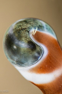 Eye of the hermit crab. by Mehmet Salih Bilal