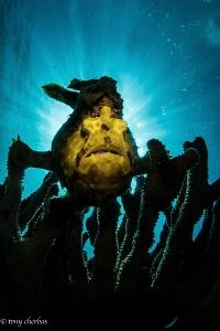 Creature by Tony Cherbas