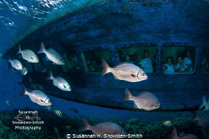 School children peer out the windows of a glass-bottom bo... by Susannah H. Snowden-Smith