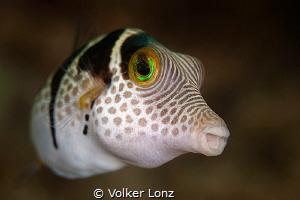 filefish by Volker Lonz