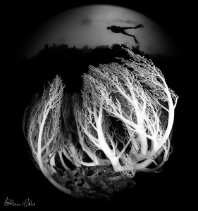 upwelling lifted the skirt on this coral, when I looked u... by Steven Miller