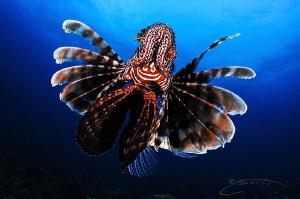 ~ Float like a Butterfly Sting like a Bee ~ by Geo Cloete