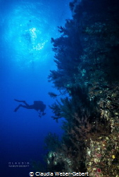 reef life on El Hierro by Claudia Weber-Gebert