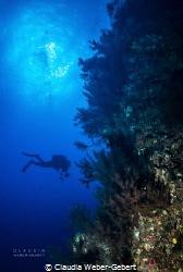 reef life on El Hierro by Claudia Weber-Gebert