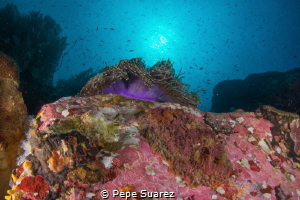 Big nudi @Black Rock by Pepe Suarez