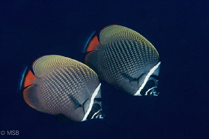 Lovely couple. Similan islands. by Mehmet Salih Bilal