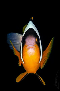 ~ Where is Nemo? ~ by Geo Cloete