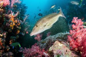 A reef scene from Richelieu Rock, Surin islands. by Mehmet Salih Bilal