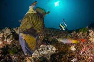 Scary Titan Trigerfish by Pepe Suarez