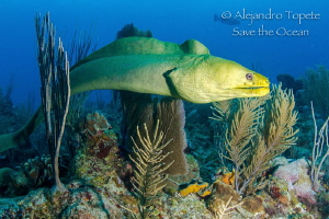 Hunting on the Reef, San Pedro Belize by Alejandro Topete