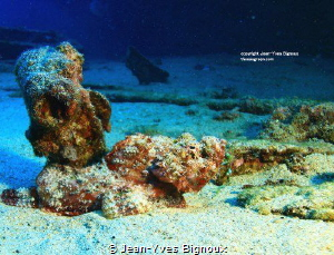Stonefish Mauritius (Synanceia verrucosa)(,this one was q... by Jean-Yves Bignoux