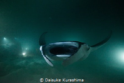 Manta Ray from darkness.