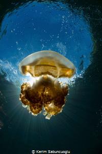 Beautiful Jellyfish by Kerim Sabuncuoglu