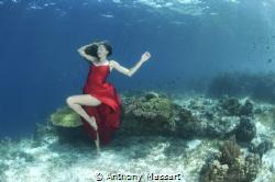 Panglao mermaid by Anthony Massart