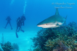 Divers with Reef Shark, Half moon caye Belize by Alejandro Topete