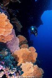 coral and diver by Daisuke Kurashima