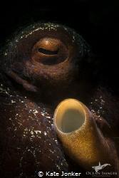 Common Octopus by Kate Jonker
