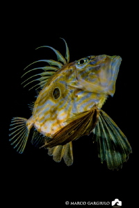 John Dory by night by Marco Gargiulo