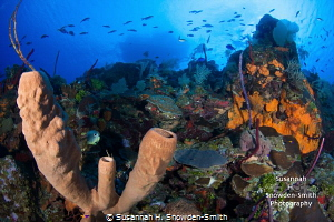 """""""Colorful Reef Scene""""  Babylon, East End, Grand Cayman... by Susannah H. Snowden-Smith"""