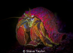 Night dive using fluorescent filters. The colours are flu... by Steve Taylor