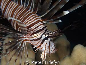 lionfish by Pieter Firlefyn