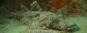 Crocodile by Helen Hansen
