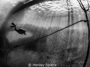 Sardines Swoop as a Diver Descends by Henley Spiers
