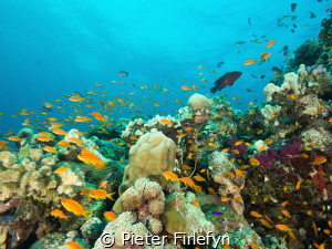 marine life in the Red Sea Sudan! by Pieter Firlefyn