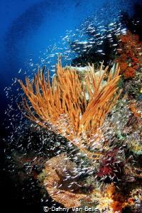 The reefs of Raja Ampat by Danny Van Belle