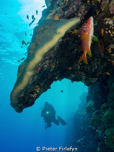 Red sea / Sudan by Pieter Firlefyn