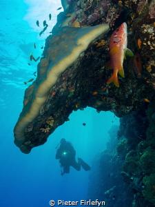 Red sea / Sudan by Pieter Firlefyn